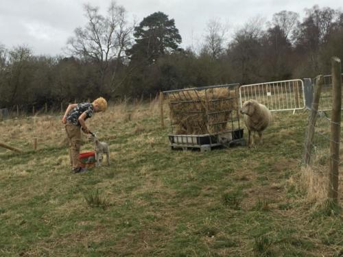 Our hobby farm